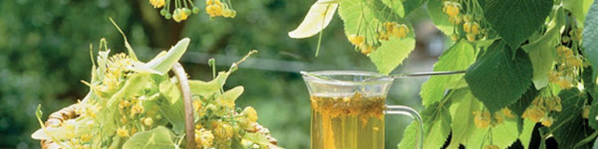 Эффективность лекарственных трав от простуды